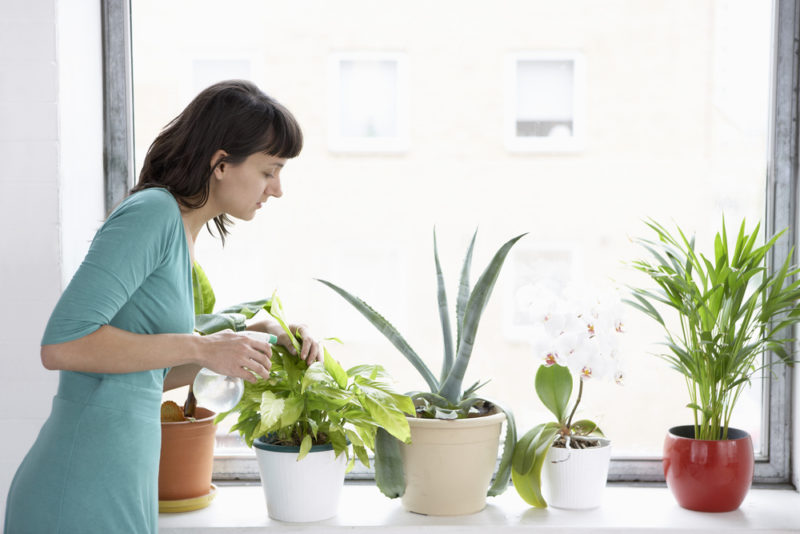 Can Indoor Plants Cause Allergy Problems?